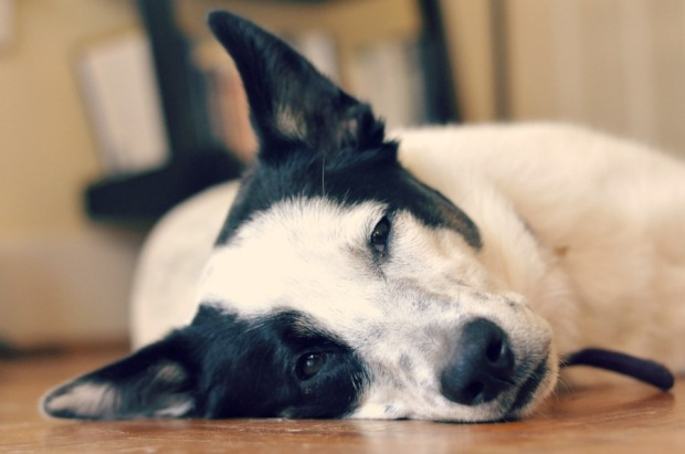 seymour resting