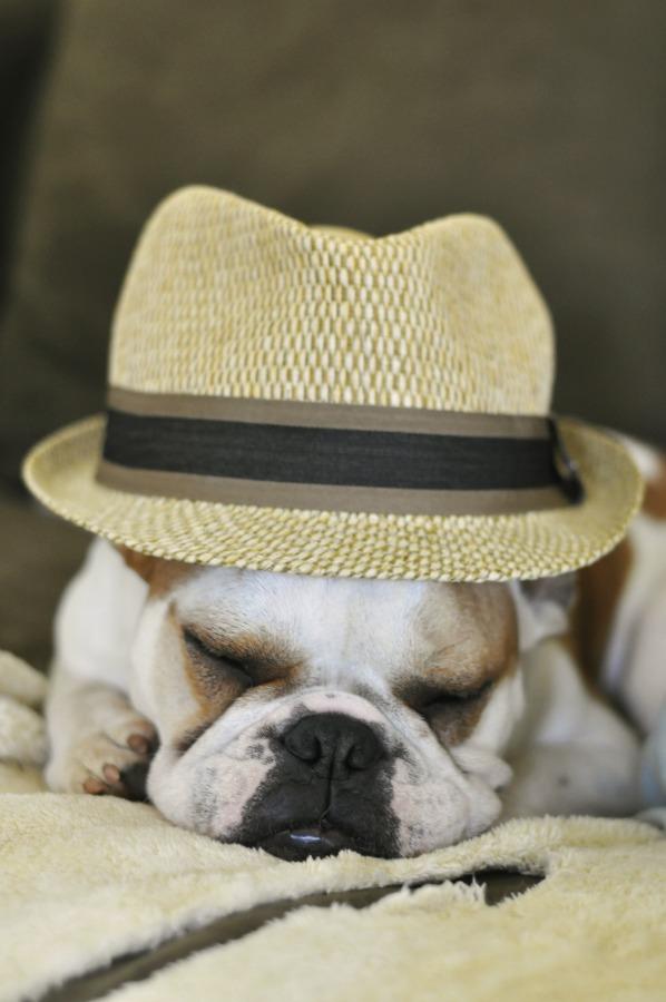 thunder in derby hat