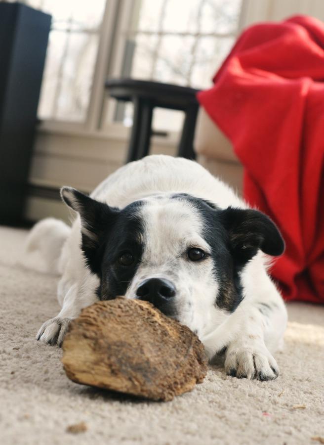 seymour chomping wood